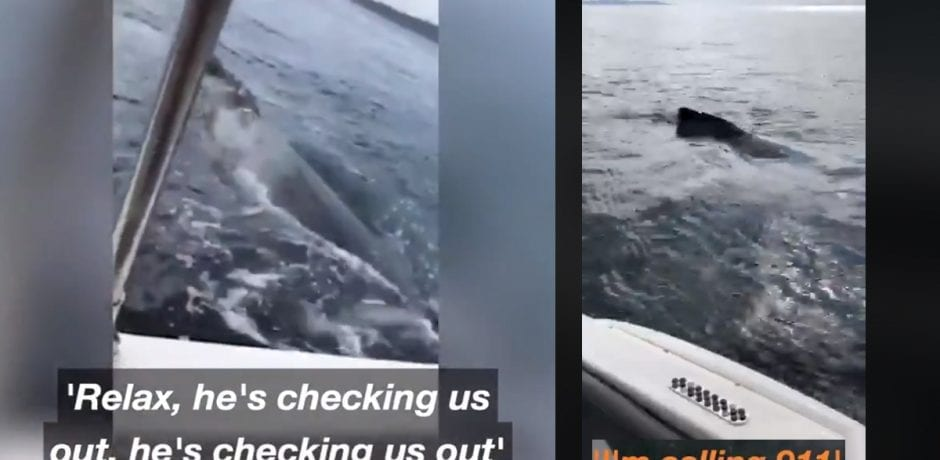 Woman Calls Police On Whales Who Invaded Her Safe Space (Seriously, This Happened)